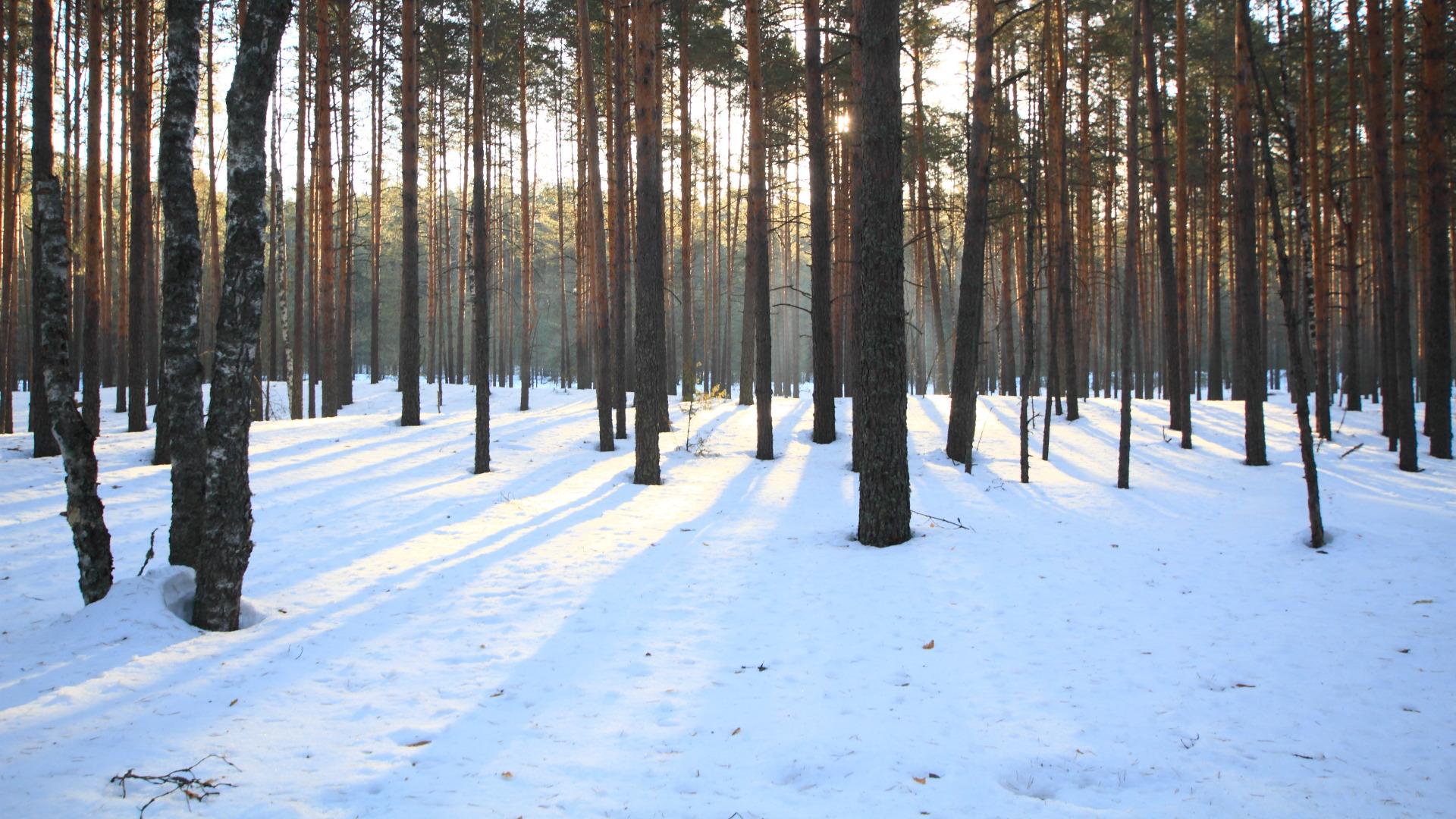 Сосновый лес. 27.03.2021